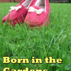 REVIEW: CREATIVE COW PRESENTS…BORN IN THE GARDENS